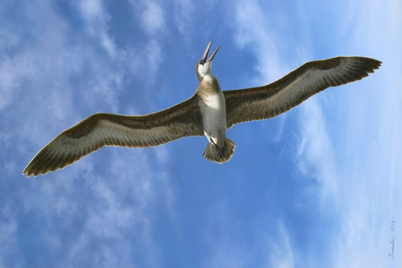 en71-the-largest-flying-creatures_12